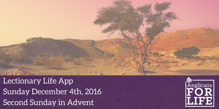 Lectionary Teaching, second Sunday of Advent
