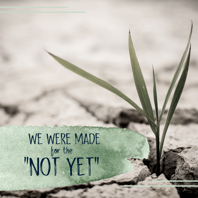 Abundant Life We Were Made for the Not Yet blog Pin